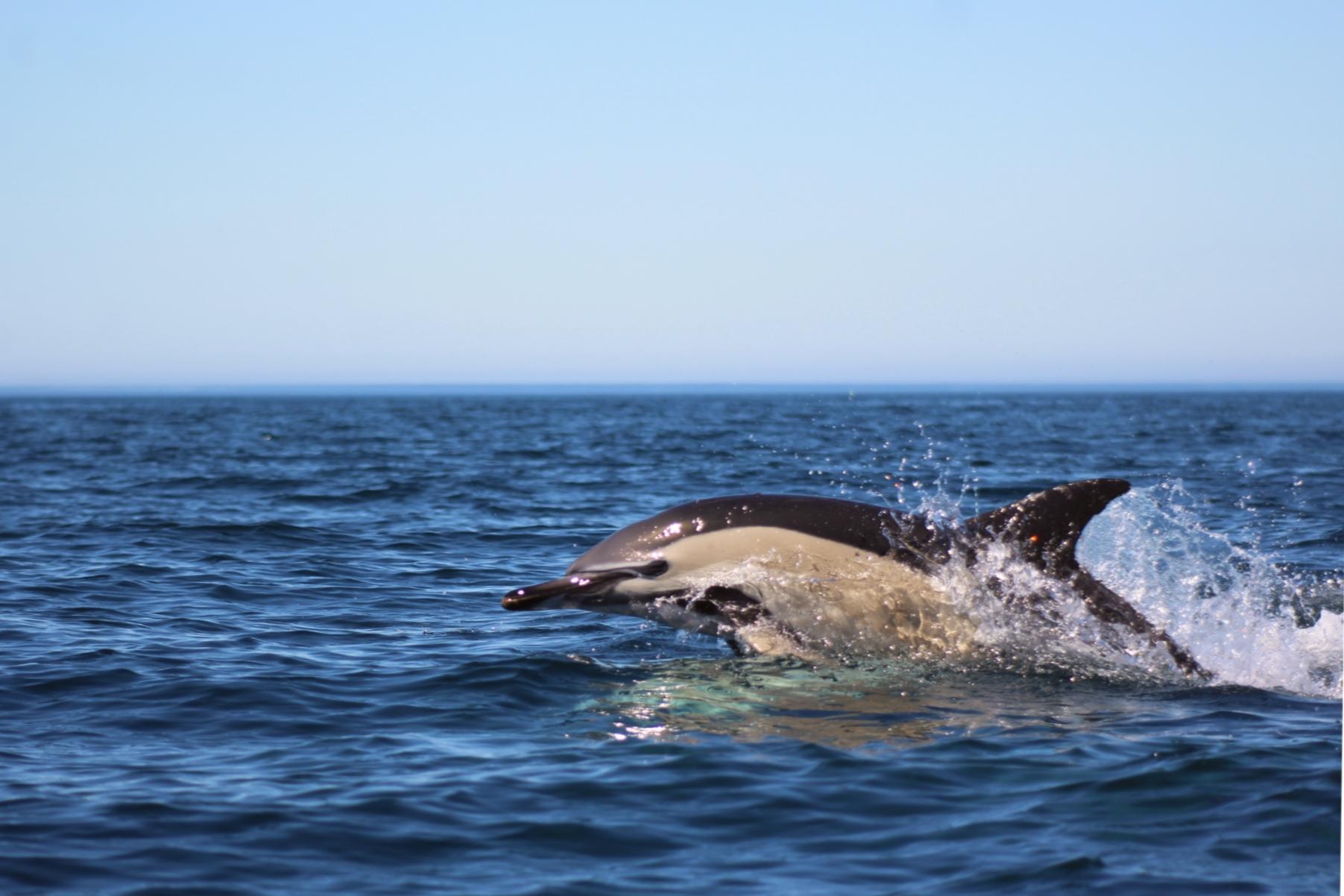 comum perto nadando (Rafa)